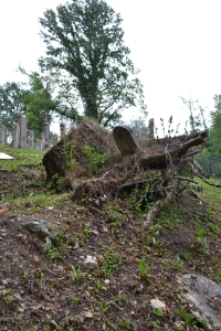 Recent storms uprooted trees and graves